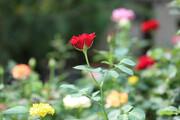 پست های قرنطینه گیاهی جدید در مرزهای کشور راه اندازی می شود