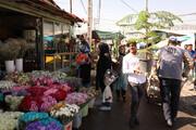 قاچاق به صنعت گل و گیاه آسیب  وارد کرده است
