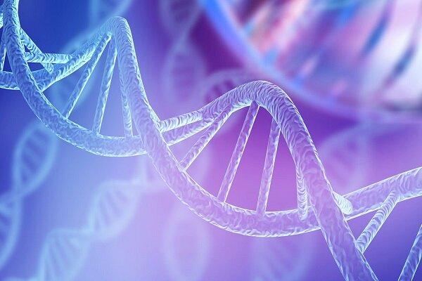 تبدیل رشتههای DNA به ساختارهای سهبعدی کاربردی