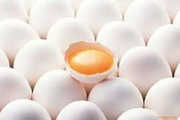 کاهش قیمت تخم مرغ و کَره در گرو تخصیص ارز به نهادههای دامی