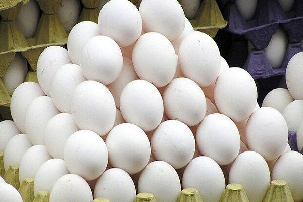 صادرات تخم مرغ ممنوع است
