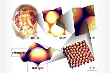 الهام از نانوپوشش چشم حشرات در تولید سطح ضدبازتابش