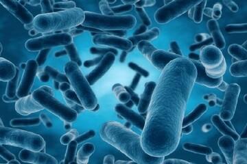 خطر شیوع نوعی عفونت قارچی در محیط های بیمارستانی