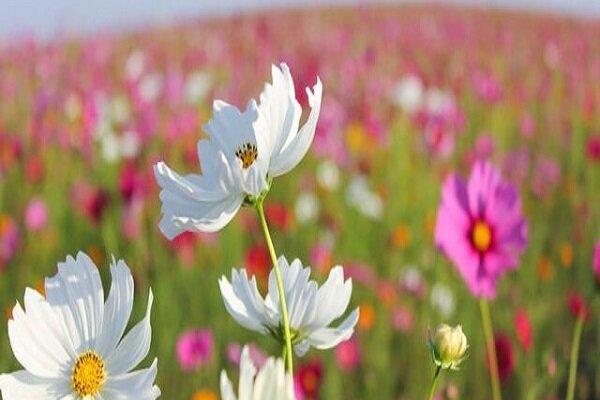 رنگ گلها در واکنش به گرمایش زمین در حال تغییر است!