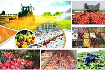 تولید ۲۷ میلیون تن محصولات سبزی و صیفی در فضای باز