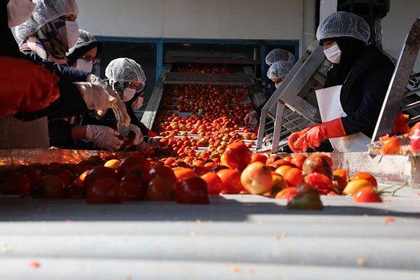 راهاندازی اولین اورژانس محصولات کشاورزی به همت بنیاد برکت