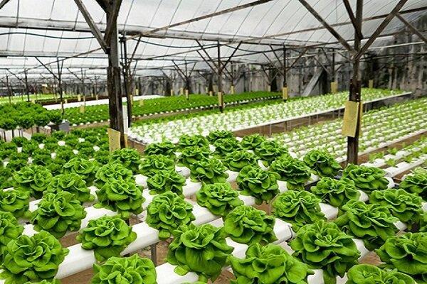 راهاندازی شتابدهنده گیاهان زینتی در سرای نوآوری واحد گرگان/ شهریه دانشجویان با فعالیت در سرای نوآوری کاهش مییابد