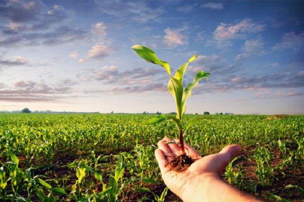 ۴محور اصلی همکاری دانشگاه آزاد اسلامی و هلدینگ کوثر/ از خودکفایی در فناوریهای کشاورزی تا تامین درآمدهای غیرشهریهای