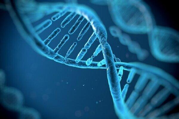 ۶۴ ژنوم انسانی توالی یافت