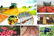 افزایش ۴۳۰ درصدی یارانه نهاده ها وخرید تضمینی محصولات کشاورزی در بودجه ۱۴۰۰