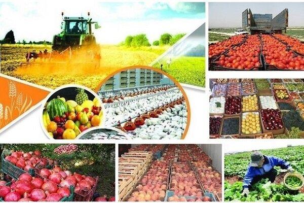 دولت بزرگترین مانع پیش روی بخش کشاورزی شده است
