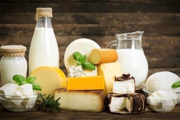 تامین ۷۰ درصدی استارتر لبنی مناسب ذائقه ایرانی توسط محققان کشور