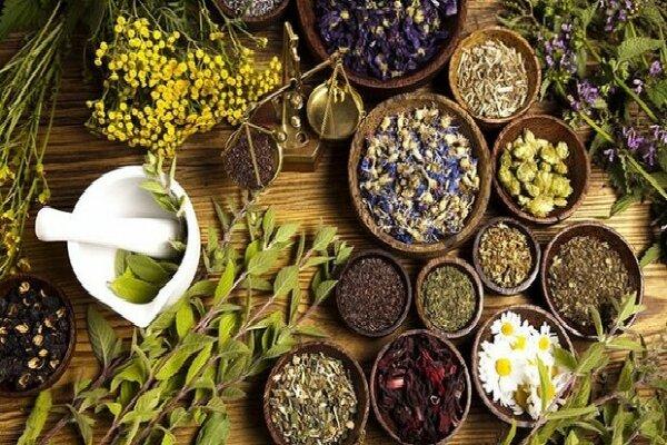 درآمدزایی ۱ میلیاردی در سرای نوآوری گیاهان دارویی و میوه های گرمسیری