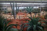 درآمدزایی ۲ میلیاردی از فروش گیاهان زینتی/ گردشگری کشاورزی را در استان ایجاد کردیم