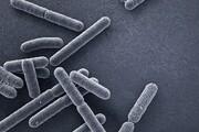 دارویی که مقاومت در برابر آنتی بیوتیک را از بین می برد