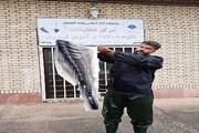 تولید چرم ماهیان خاویاری در دانشگاه آزاد اسلامی لاهیجان