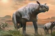 کشف بقایای کرگدن عظیمالجثه ۲۲میلیونساله در چین+ تصاویر