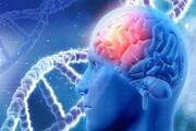 کشفی غیرمنتظره در مغز متوفیان مبتلا به آلزایمر