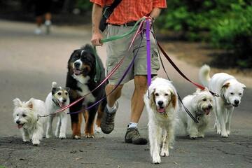 نگاهی به قوانین سگ گردانی در آمریکا و اروپا