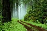 گردشگری ایران / پارک جنگلی گیسوم کجاست؟