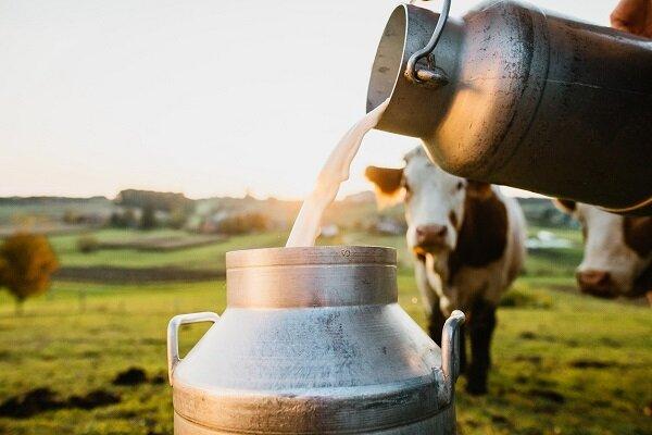 دانشمندان از شیر گاو کپسول دارو ساختند
