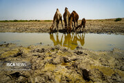 تالاب صالحیه کرج در معرض خشکی کامل
