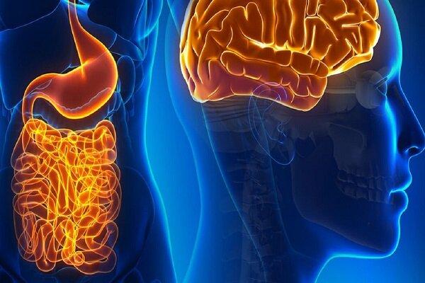 تاثیر باکتریهای روده بر رشد مغز