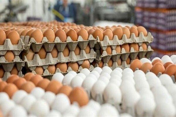 تخم مرغ درب مرغداری ۲۱ هزار تومان / دلیل افزایش قیمت چیست؟