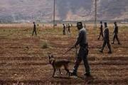 جستجوی اسرای فلسطینی ۳۱ میلیون دلار برای صهیونیستها آب خورد
