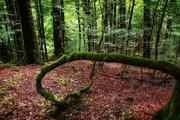گردشگری ایران / جنگل لفور کجاست؟