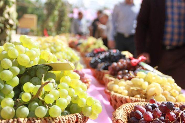برگزاری جشن ملی انگور به میزبانی دانشگاه آزاد اسلامی تاکستان