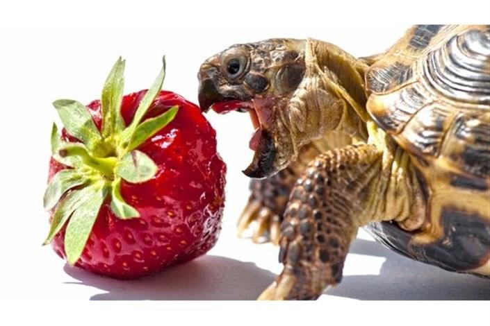 کنترل رفتار یک لاکپشت با ربات