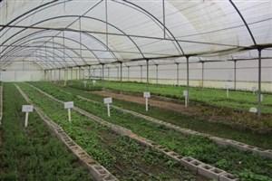 گلخانههای دانشگاه آزاد گرگان به عنوان جاذبههای «توریست کشاورزی» شناخته شد