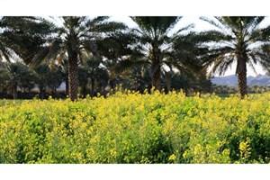 تفاهم نامه وزارت جهاد با کارخانجات روغن کشی