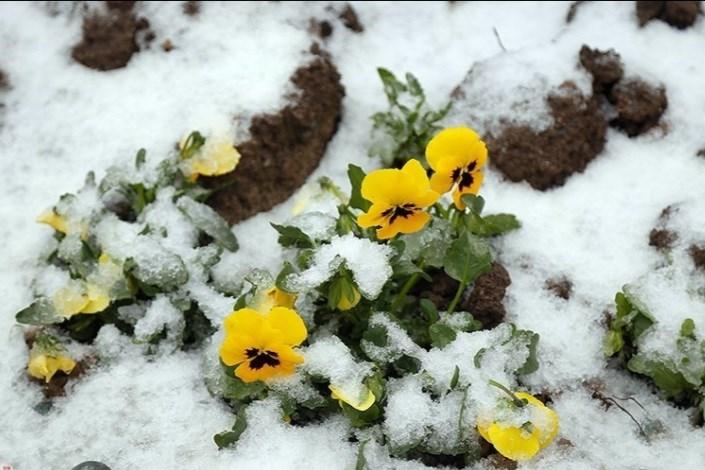 از فردا هوا سردتر می شود/برف و باران آخر هفته در ۱۷ استان کشور