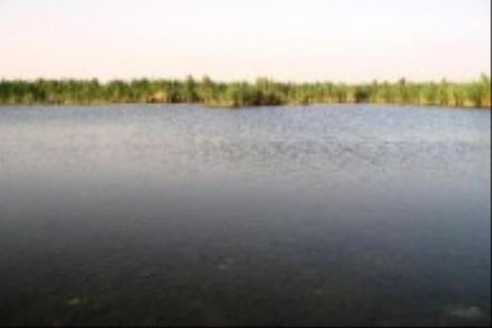 کمبود اکسیژن عامل مرگ ماهی های تالاب هورالعظیم