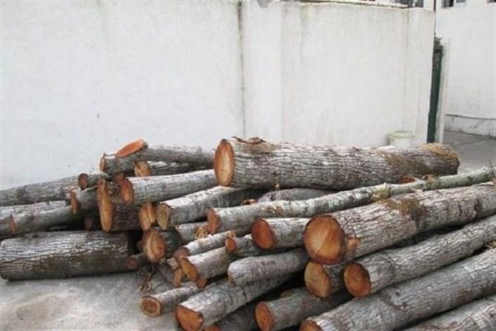 کشف ۲.۵ تن چوب قاچاق در جنوب غرب پایتخت
