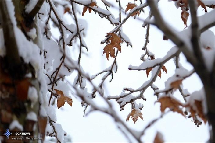 سلام به زمستان با برف پاییزی