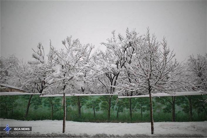سه شنبه؛ بارش برف و باران در تهران/دوشنبه وزش باد شدید و احتمال بارش برف در پایتخت