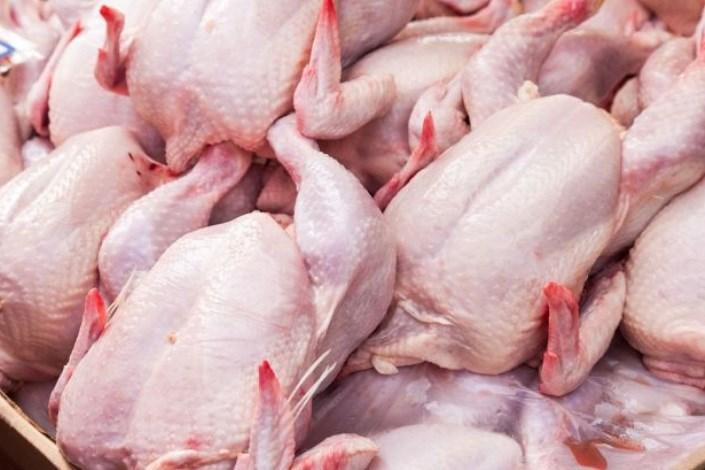 قیمت مرغ پر کشید/ نرخ در آستانه ۹ هزار تومان