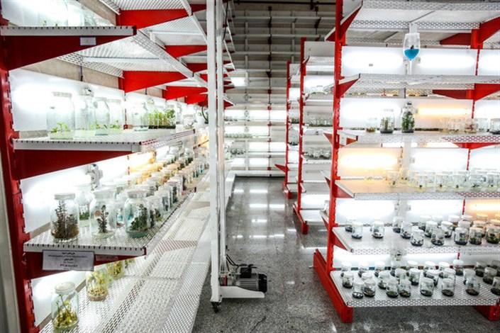 کارخانه تولید محصولات گیاهی دانشگاه آزاد اراک افتتاح میشود