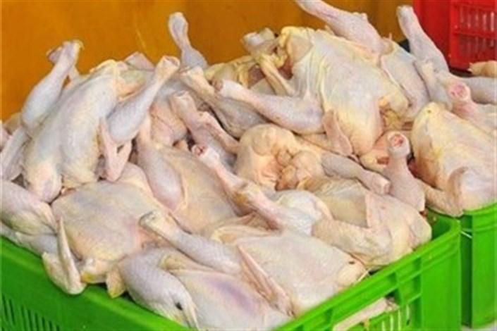 توزیع مرغ با قیمت ۱۱ هزار و ۱۵۰ تومان در بازار