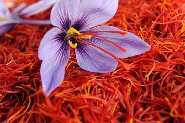 حداقل 20 تن زعفران ایران به افغانستان قاچاق می شود/موانع تجارت بین المللی طلای سرخ