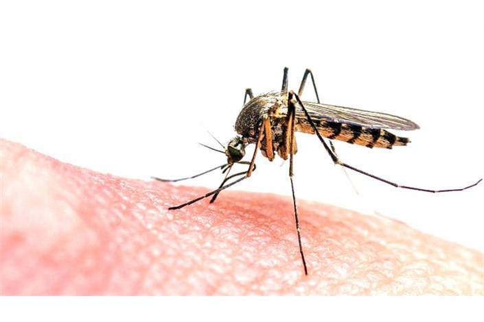 سازمان جهانی بهداشت از ایران برای حذف مالاریا قدردانی کرد