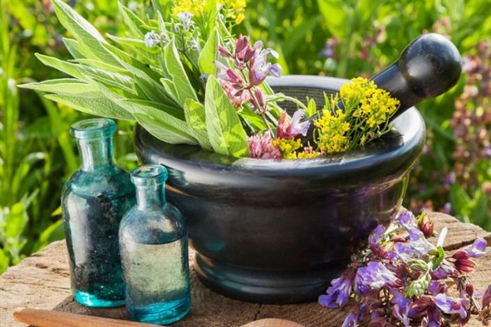 مسیر توسعه شرکتهای خلاق حوزه گیاهان دارویی هموار میشود