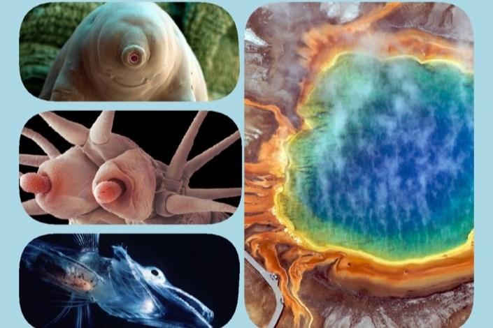 چگونه میکروبها در شرایط ناممکن زنده می مانند