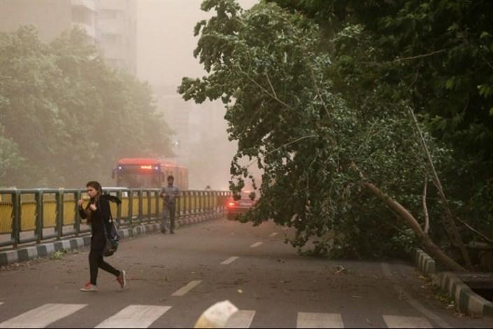 فردا  باد نسبتا شدید مهمان تهرانی هاست
