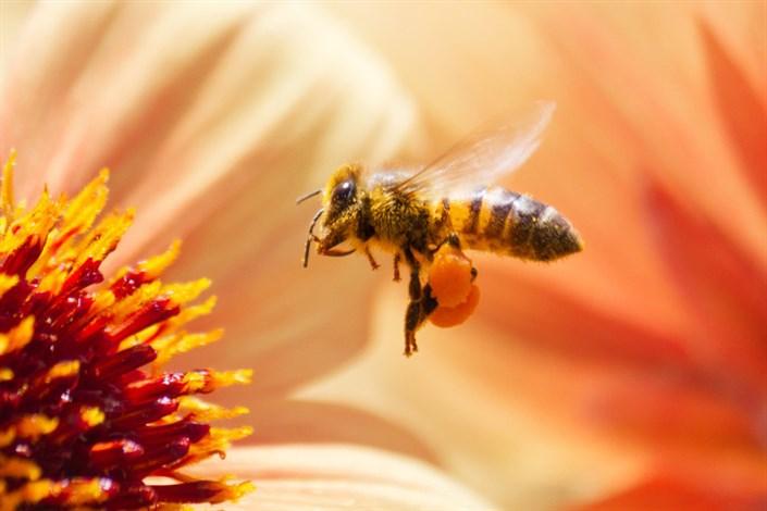 توانایی زنبورها در انجام محاسبات ساده ریاضی