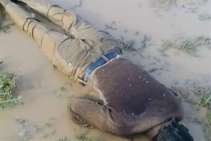 غرق شدن چوپان در گودال