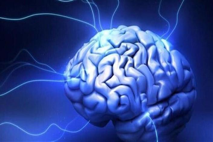 توسعه فناوری  های نوین حوزه علوم شناختی  در دستور کار معاونت علمی و فناوری ریاست جمهوری